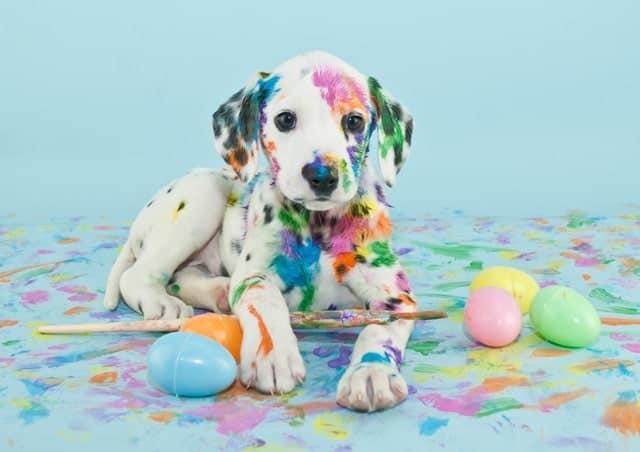 Cachorro Dalmata Manchas Pintura Huevos Pascua