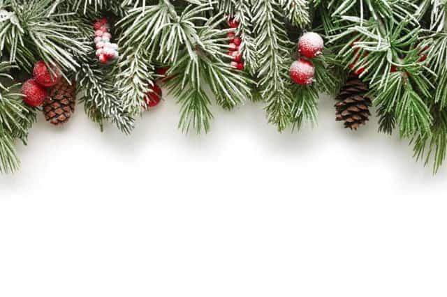 Ramas Arbol Navidad Fondo Blanco