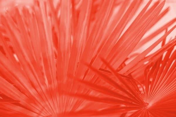 palmera hojas coral intenso